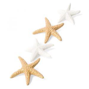 Plakbare zeeschelpen (6st)